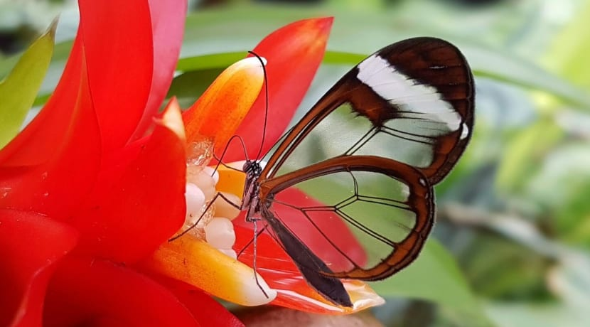 Stunning butterflies bred specially for the reopening of Stratford Butterfly Farm