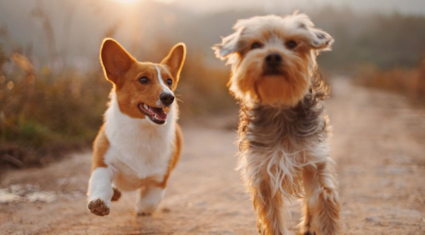 Charity Dog Walk in Ironbridge