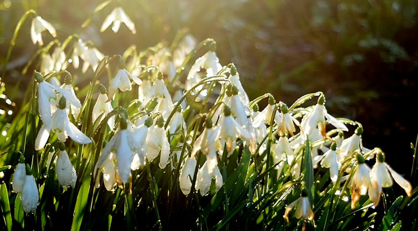 Snowdrops at Sunnycroft: The National Trust's best-kept Shropshire secret