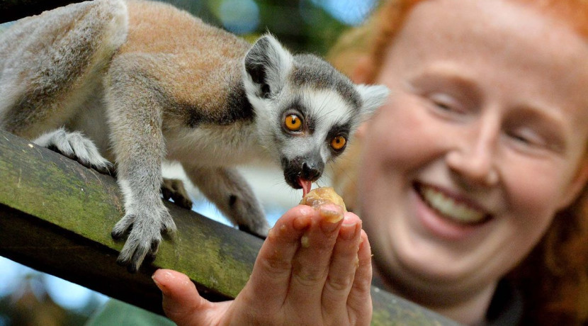 Shropshire Zoo appeals for name ideas for baby lemur
