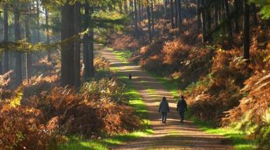 Staffordshire park ranks in UK top ten
