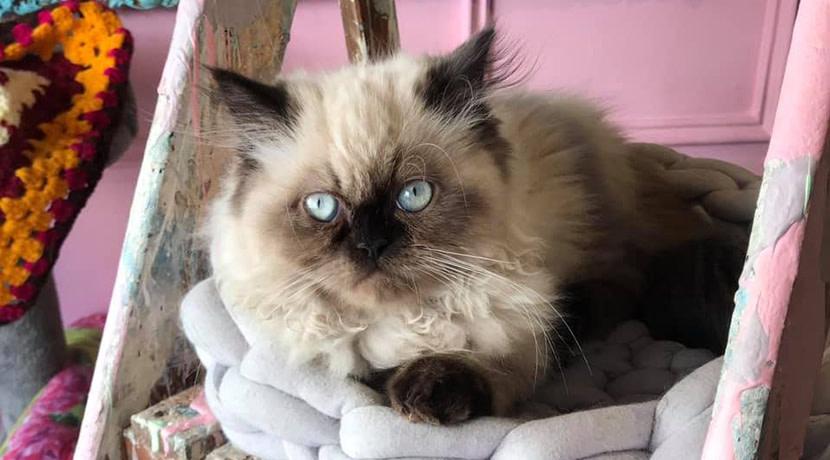 Warwickshire's only cat cafe celebrates first birthday