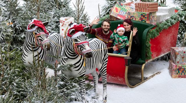 Santa Safari