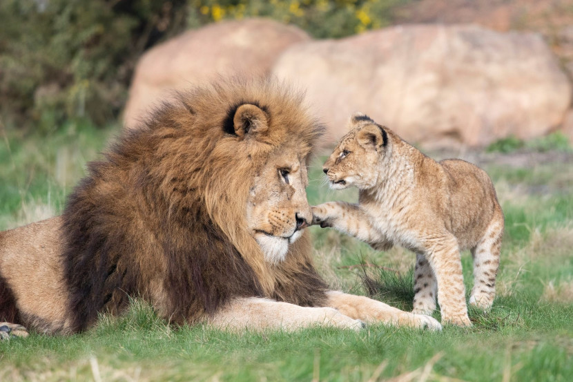 West Midland Safari Park to reopen on 12 April