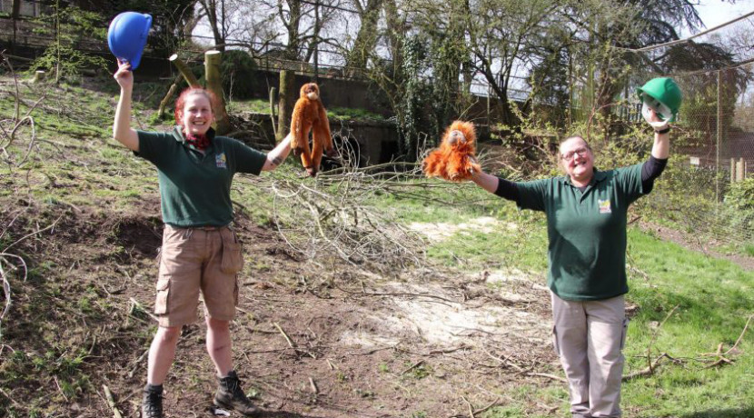 Work starts on new orangutan enclosure at Dudley Zoo