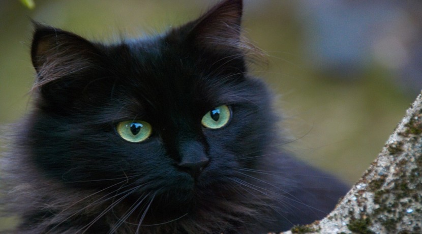RSPCA rescues 220 cats in Shropshire in the last year alone