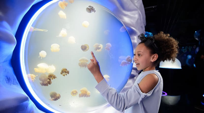A family ticket to National Sea Life Centre