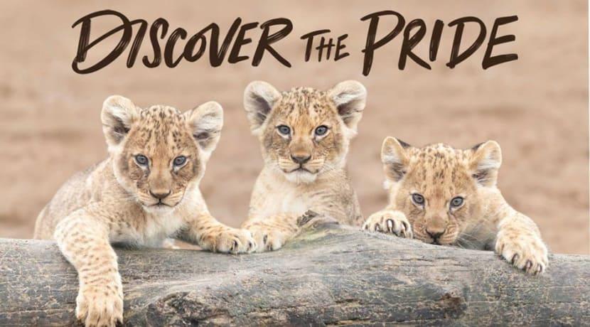Discover The Pride