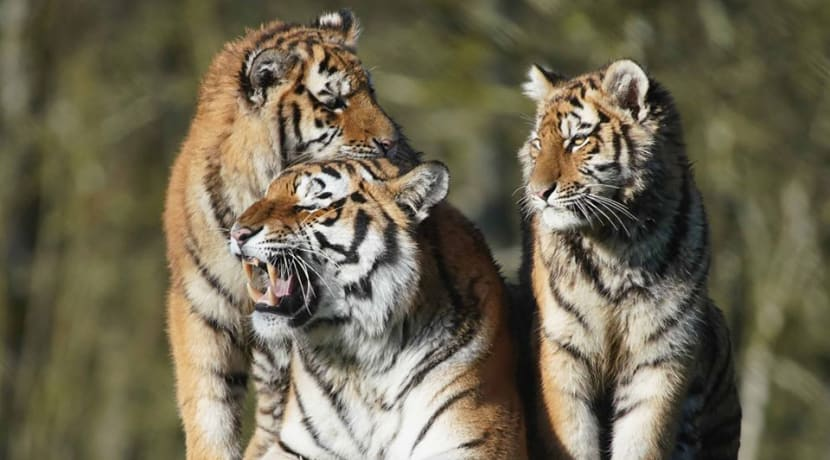 Longleat launches virtual safari for families to enjoy at home