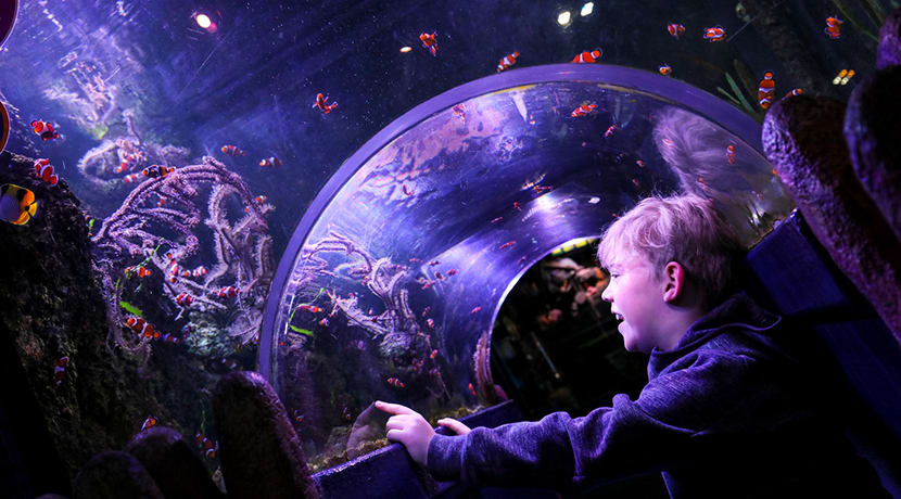 Best ever discount returns for this weekend only at National Sea Life Centre