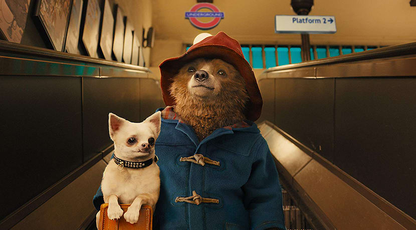 Paddington Bear comes to Shrewsbury