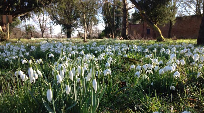 Snowdrops at Middleton Hall & Gardens