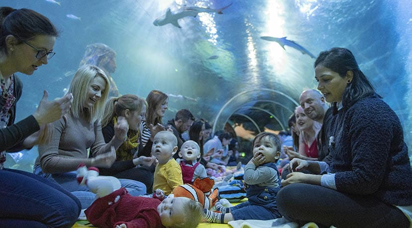 UK's first under water baby class to be held at National Sea Life Centre