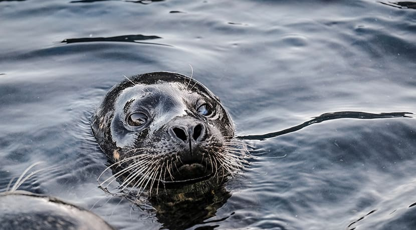 Rescued seals Miley & Boo to take up residency at the National Sea Life Centre Birmingham