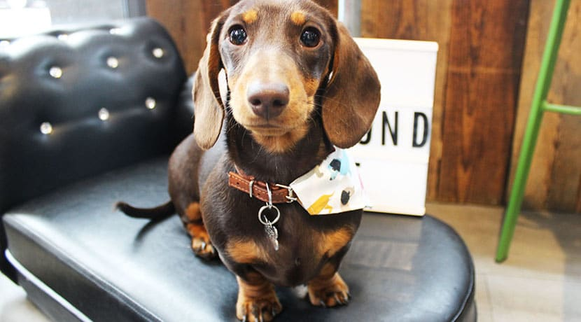 A sausage dog cafe is coming to Birmingham