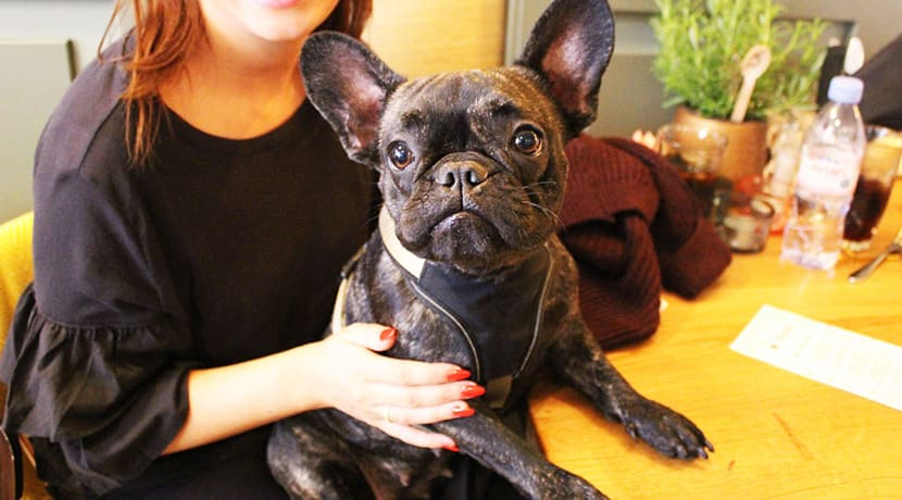 A French Bulldog cafe is coming to Birmingham