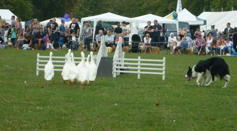 Whittington Craft & Country Fair