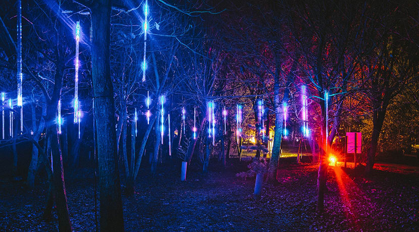 Visit an Illuminated Arboretum this Christmas