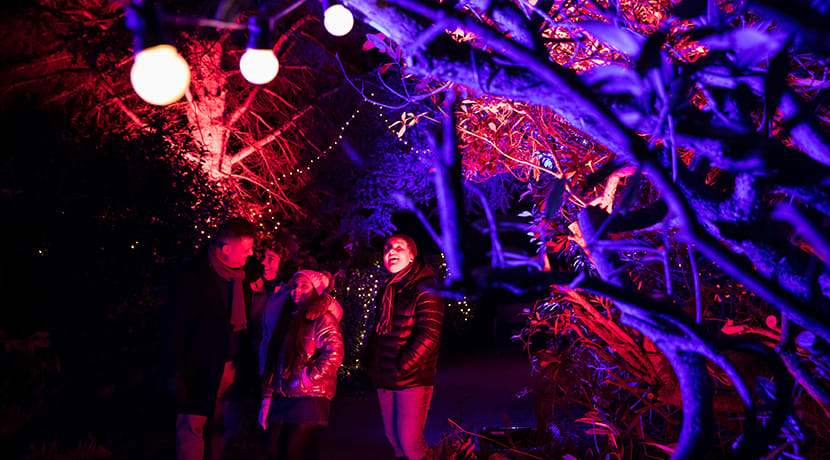 Witley Court and Gardens to be transformed into an illuminated world for Enchanted Witley