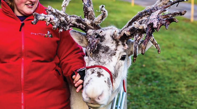 Christmas at Compton Verney