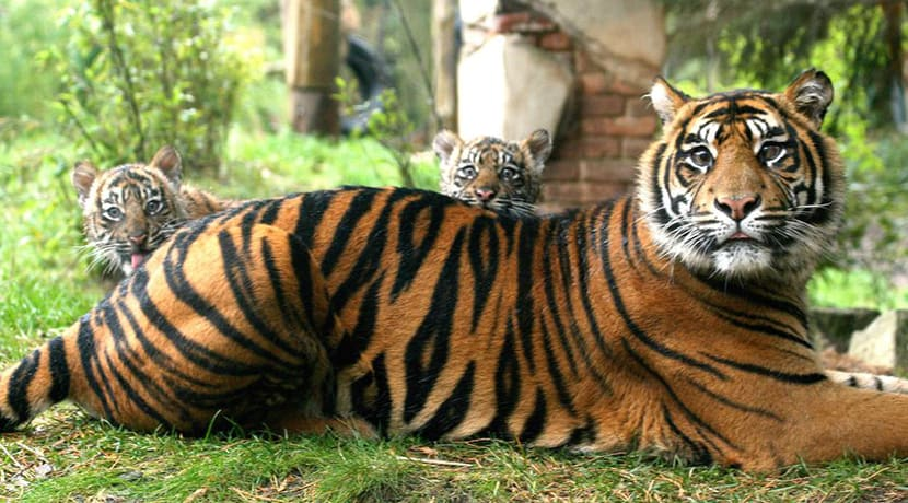 5 UK & Ireland zoos offering live streams of their residents