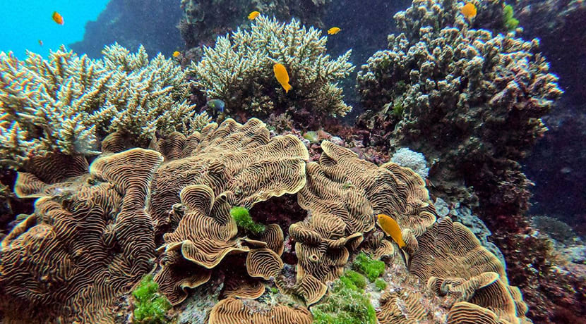 You can now take a virtual tour of the Great Barrier Reef, guided by Sir David Attenborough