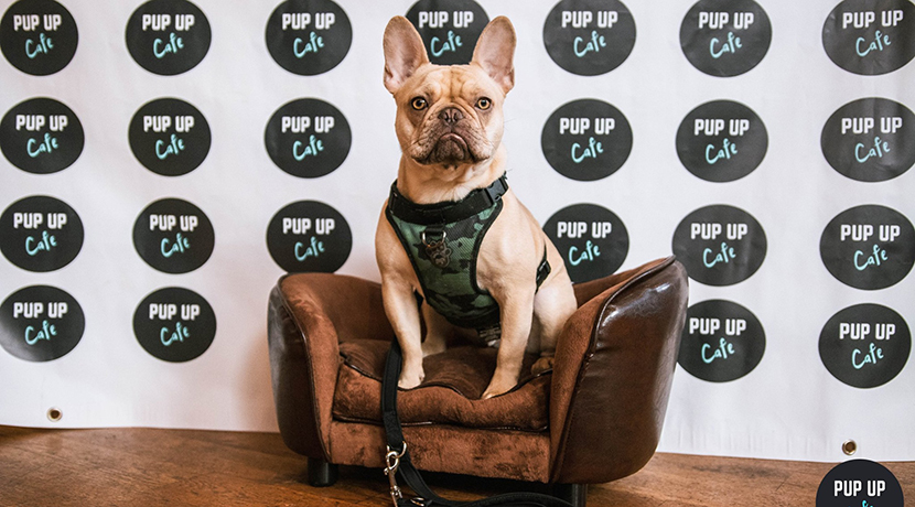 Ooh la la, Frenchie Cafe pops up in Stafford