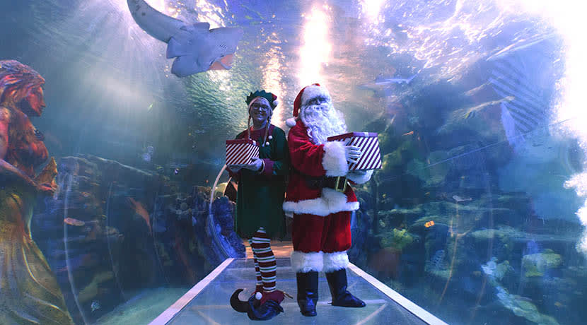 New SEA LIFE virtual grotto experience saves the magic of Christmas