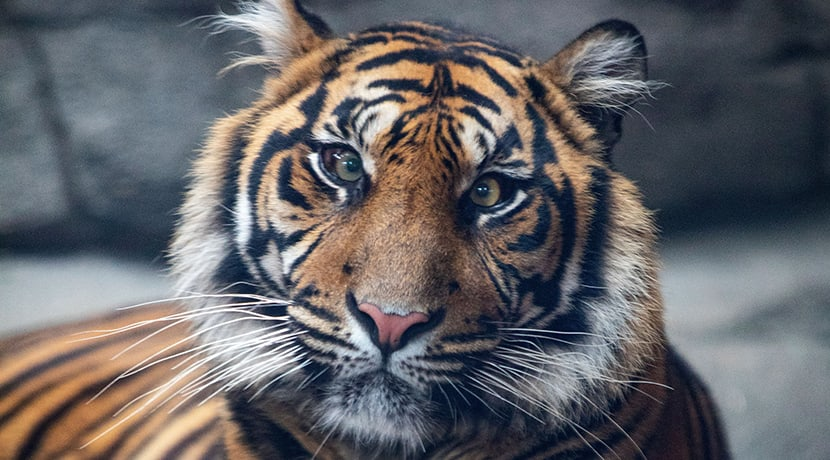 Twycross Zoo in plea for public support as conservation charity under threat