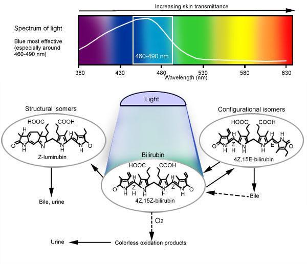 phototheraphy-infogrphic