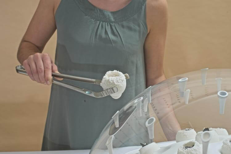 A edible jelly like material is extracted from the muschrrom
