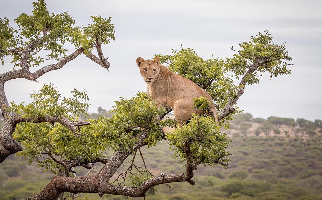 Manyoni Game Reserve