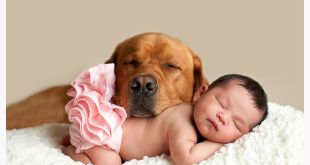 Can I Have a Dog Around a Newborn?