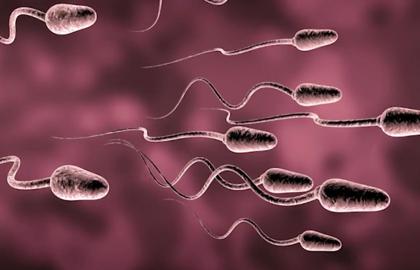Western Men's Sperm Count Is Declining-Science Says