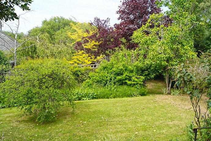 Garden - lawn area