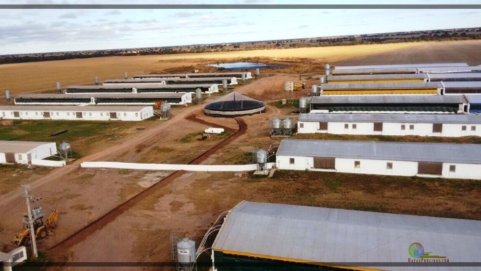 Con la producción de Biogas, Argentina tiene un potencial para producir 14,4 billones de metros cúbicos de biometano