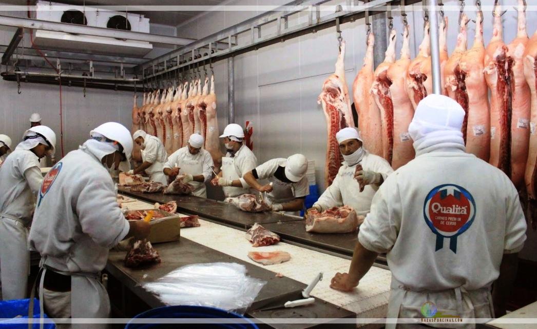 Qualitá prepara el envío de carne porcina a Rusia