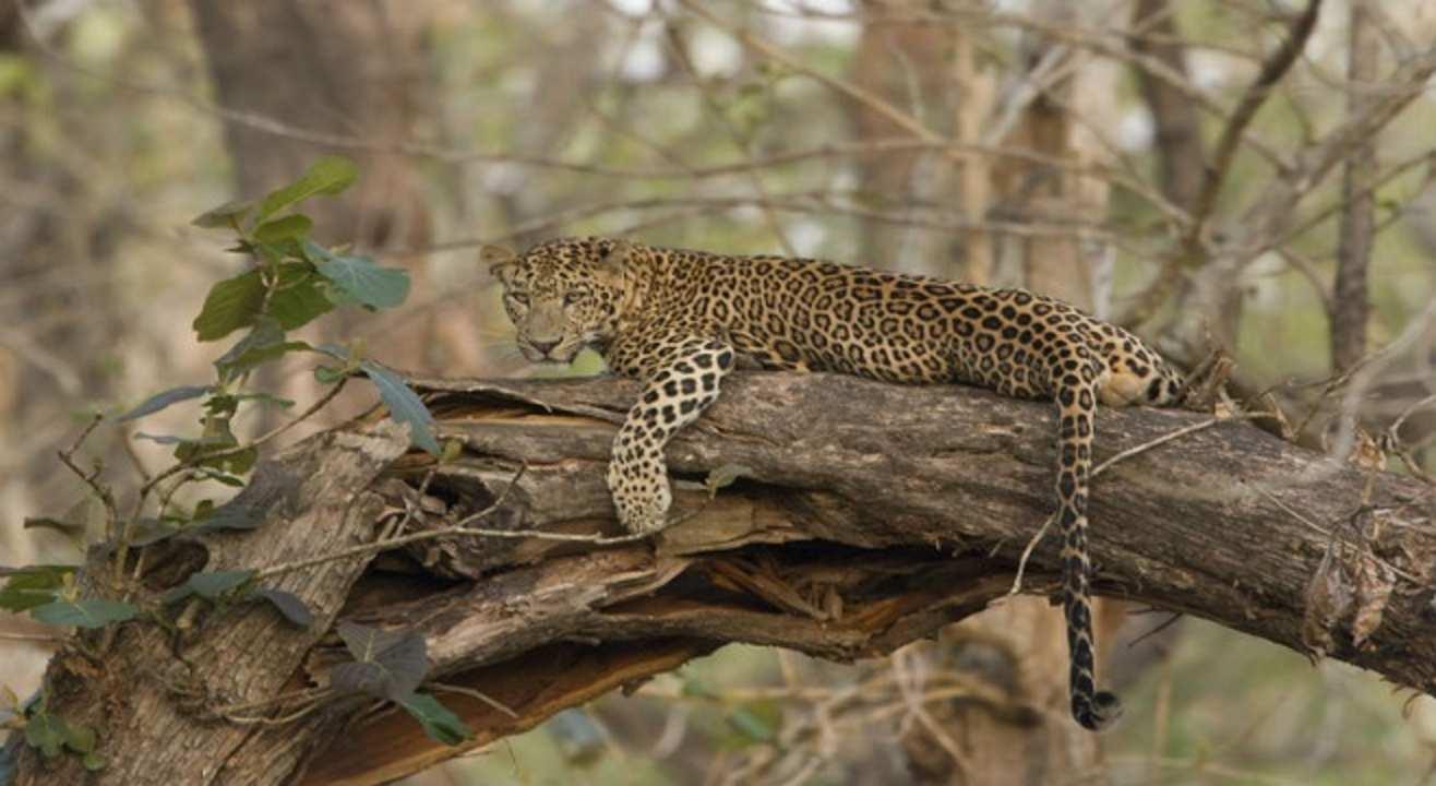 Kabini Wildlife Safari