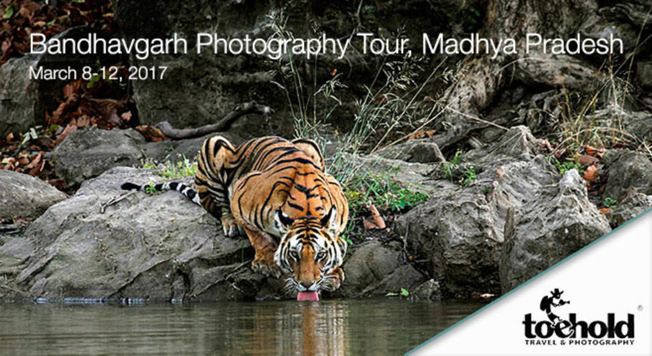 Top Cat Tryst: Bandhavgarh Wildlife Photography Tour