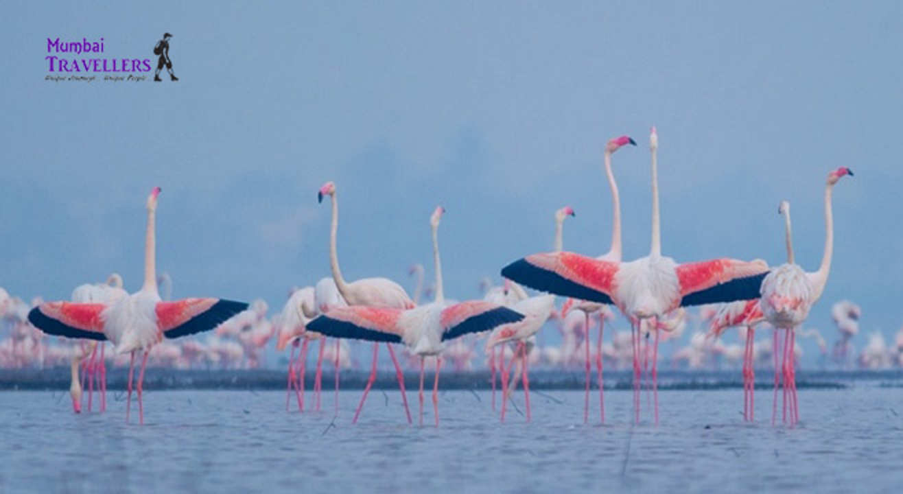 Sewri Flamingo Watching