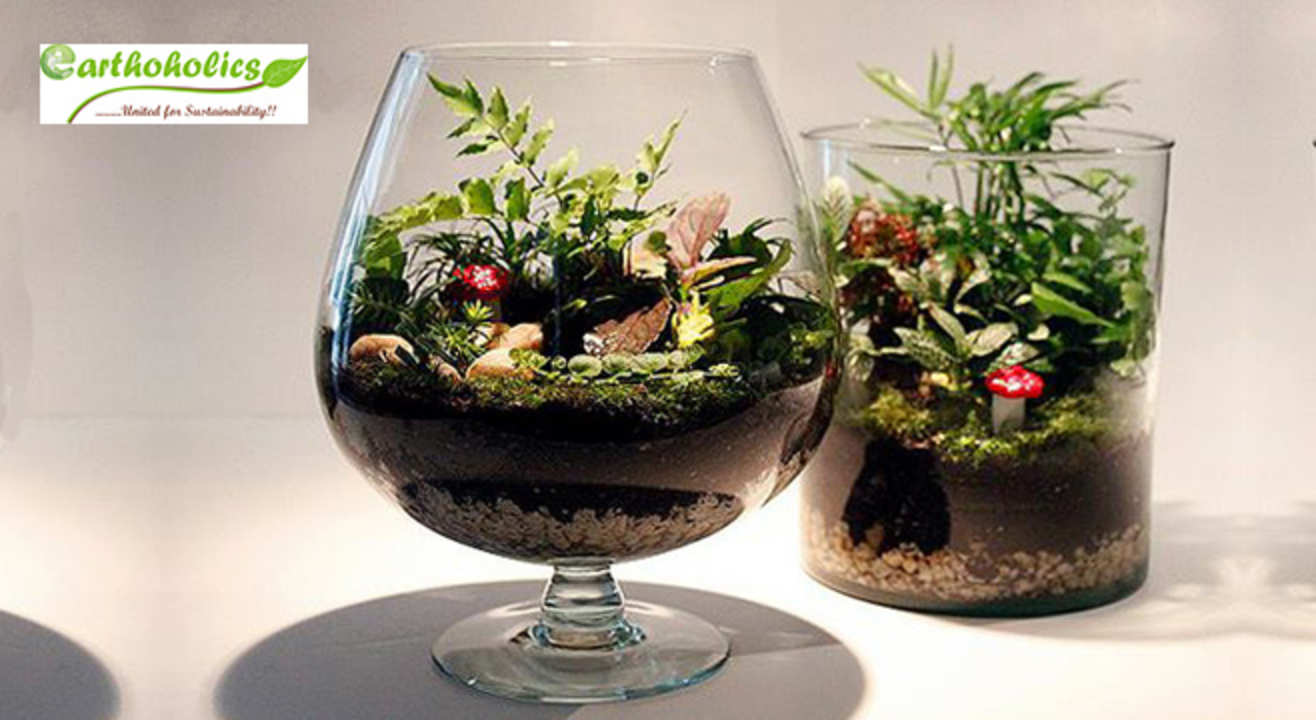 Terrarium (Miniature Gardening) Workshop by Earthoholics