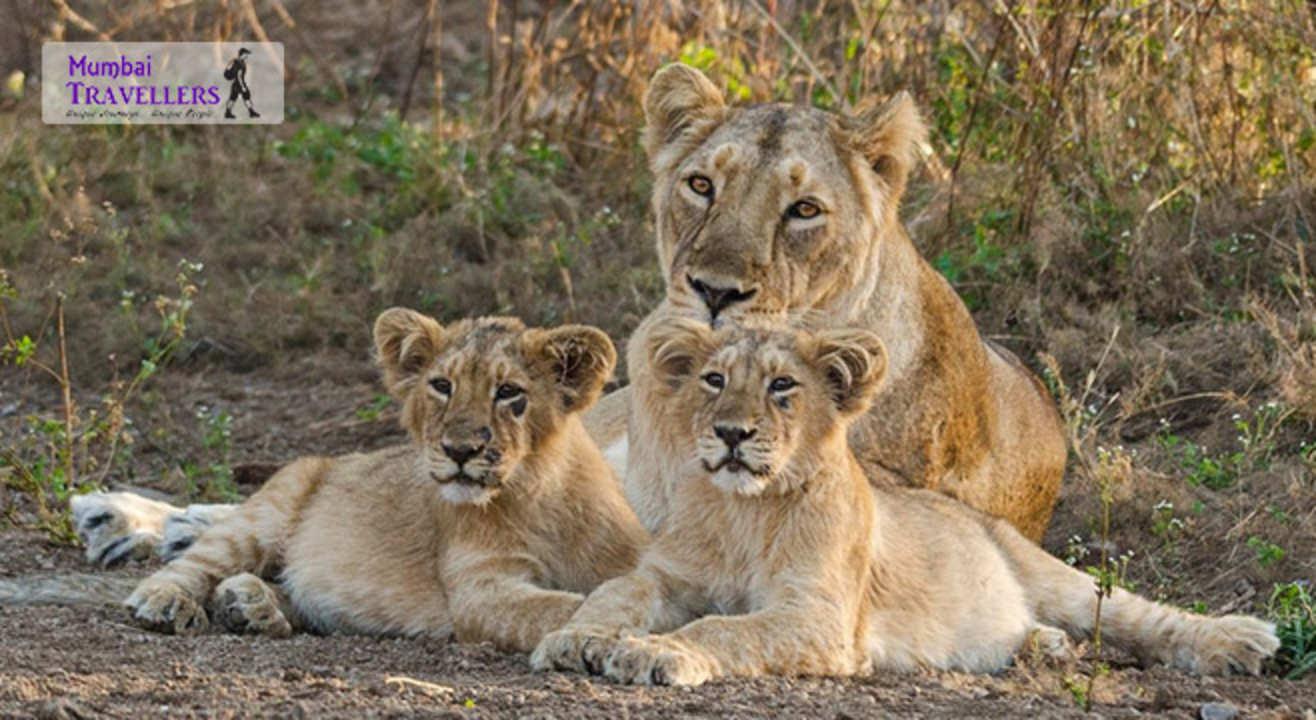 Go Safari: Gir National Park