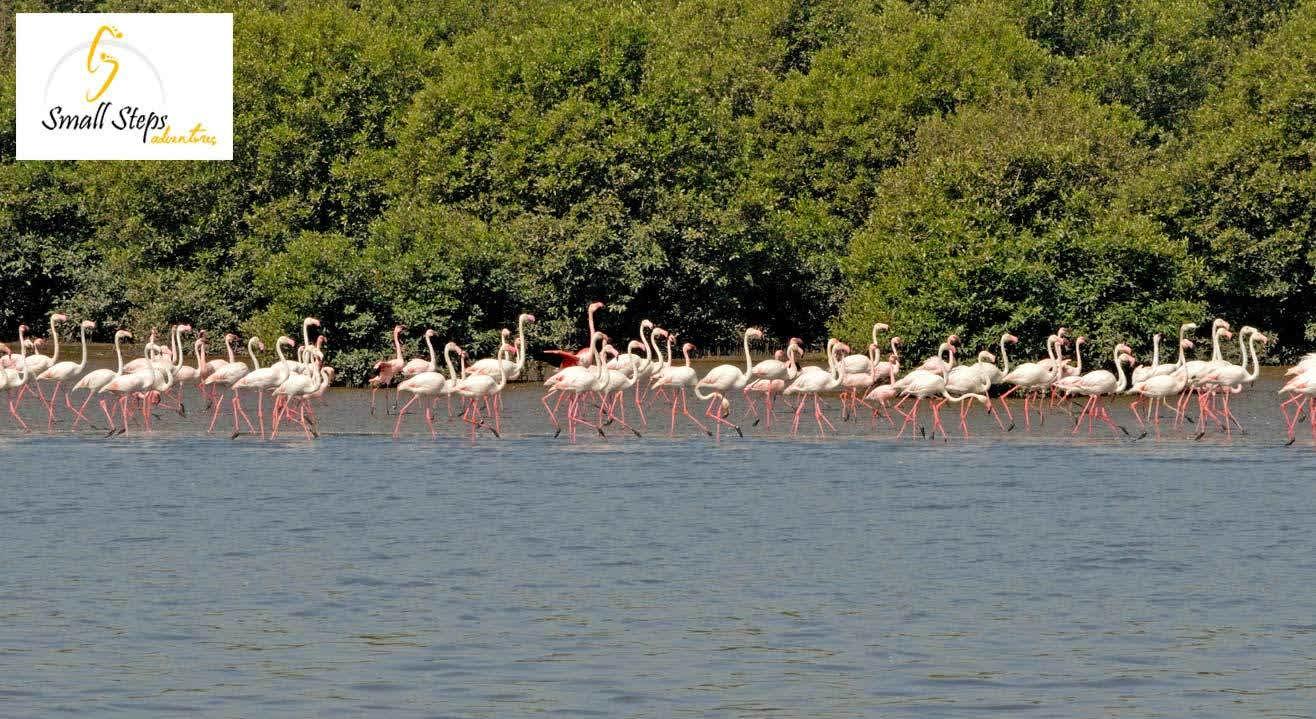 Flamingo Boat Ride