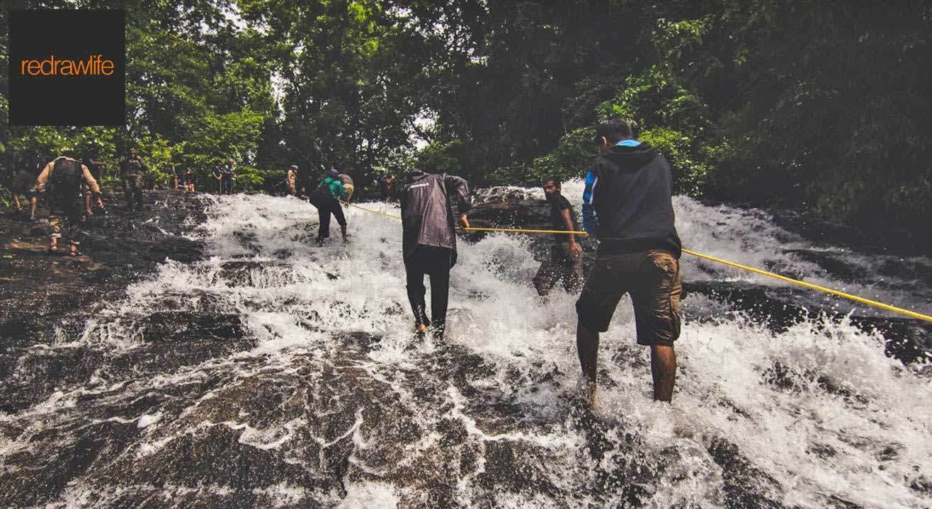 Into The Wild At Thattekkad
