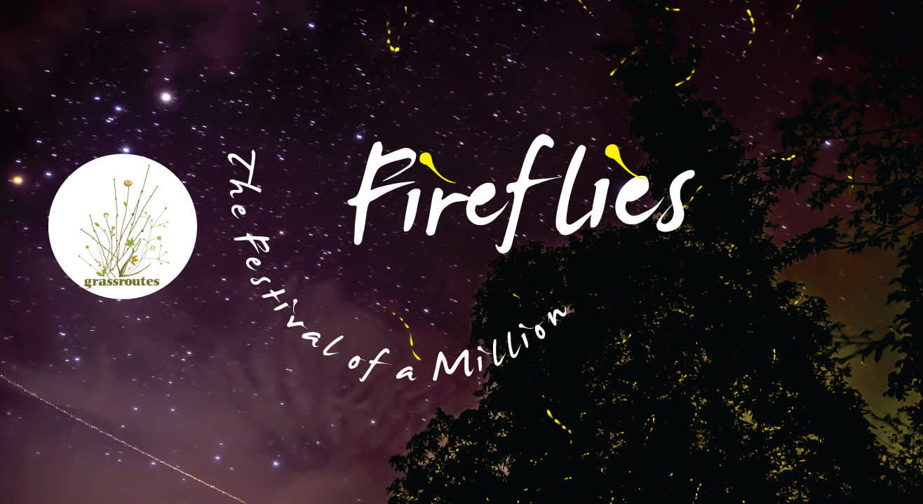 The Festival of a Million Fireflies