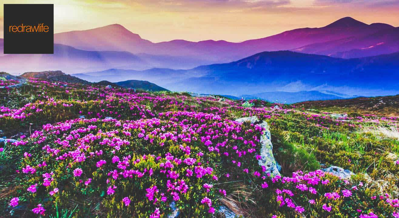 Valley of Flowers: A Magical Land of Flowers and Legends!