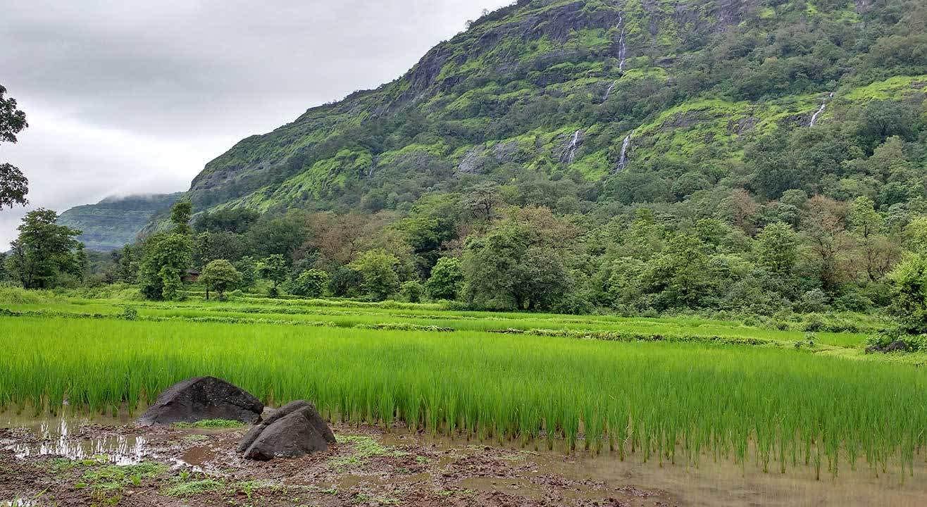 One Day Bhimashankar Trek
