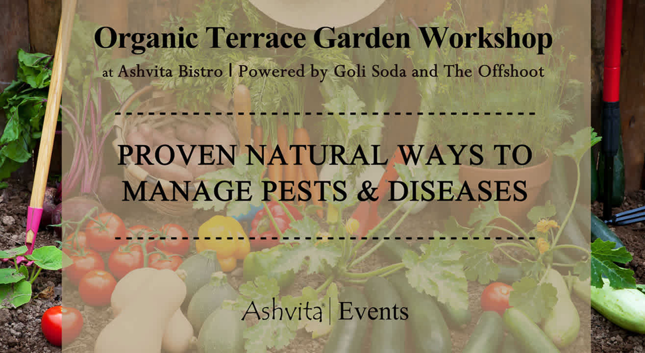Organic Terrace Garden Workshop: Proven Natural Ways to Manage Pests & Diseases