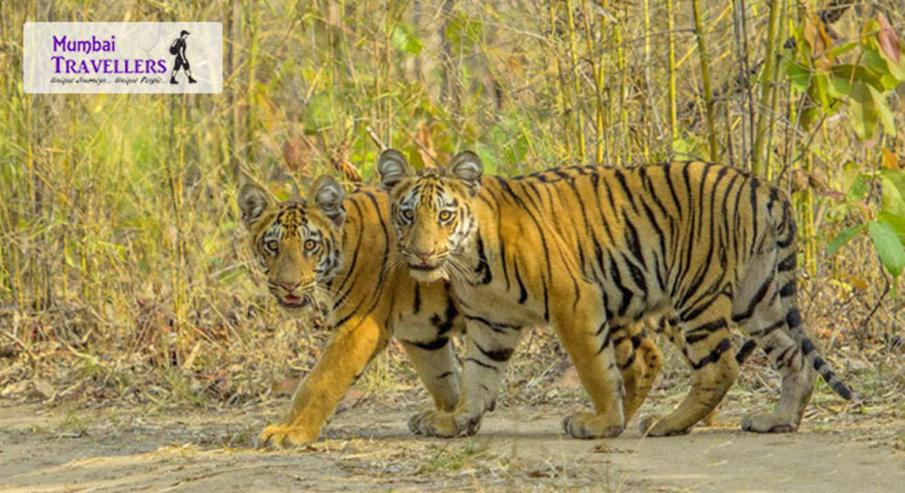 Go Safari: Pench
