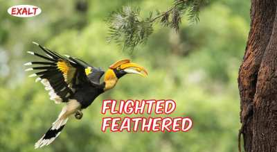 Flighted Feathered